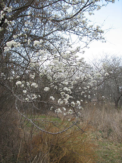 Wild Plum Trail at the Fort Worth Nature Center